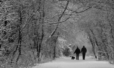 winter-walk